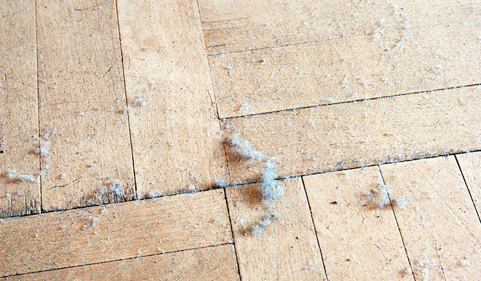 My House is Always Dusty! What Should I Do?